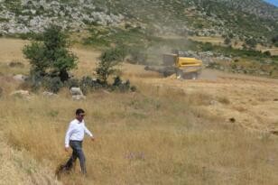 Kızılkaya Belediyesi 98 Ton buğday üretti