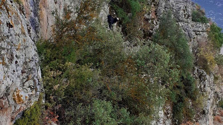 Sahipli keçi dağda mahsur kaldı