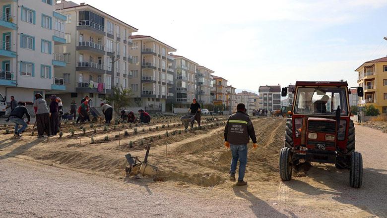 Şehrin merkezine lavanta bahçesi