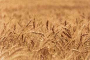 Burdur'da desteklenecek tarım ürünleri açıklandı